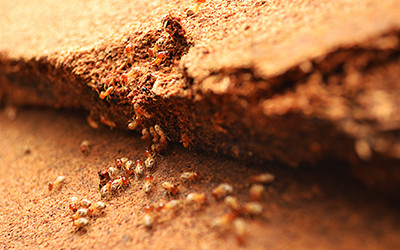 Termite Home Inspection Utah